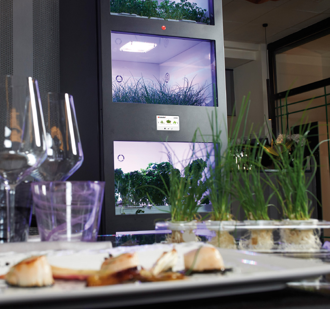 Indoor greenhouse for restaurant tomato+